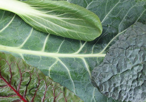A Vitamin Contained In Leafy Green Vegetables Green leafy vegetables a nutritive alkalizing food high in fiber dark leafy greens list workwithnaturefo