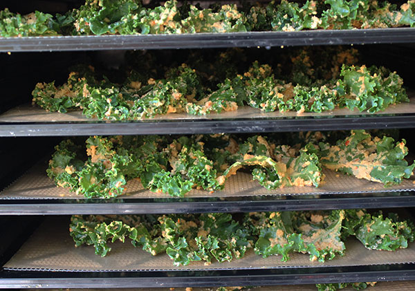 dehydrated-kale-chips-recipe