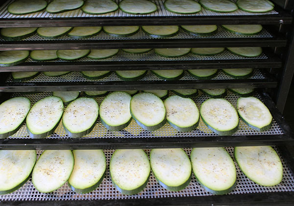 dehydrating-squash-chips