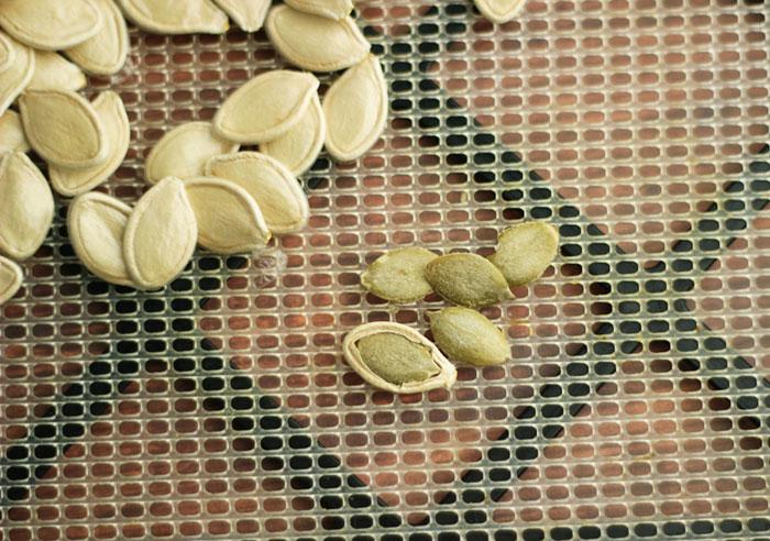 dehydrating-unshelled-pumpkin-seeds