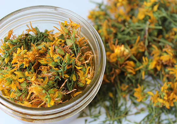 dried-st-johns-wort