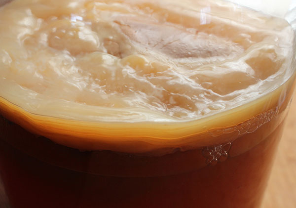 fermentation-process-kombucha