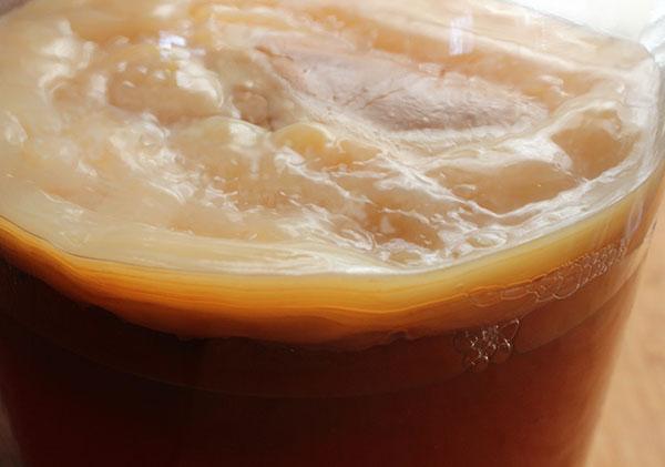 fermentation-process-kombucha