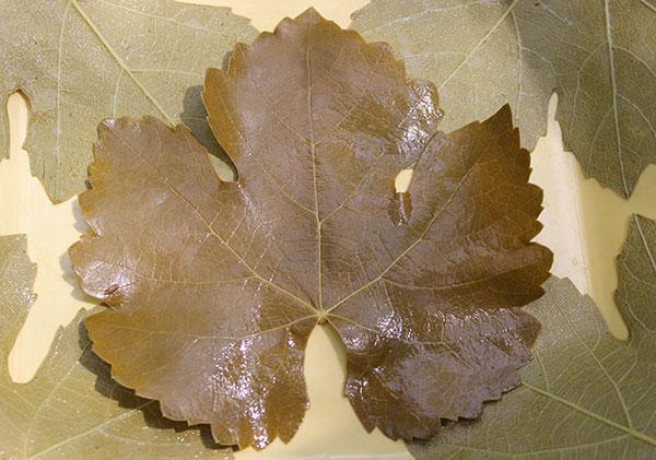 fermented-grape-leaf