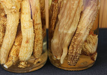ginseng-root-page