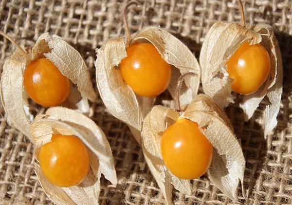 golden-berries-fresh-harvest