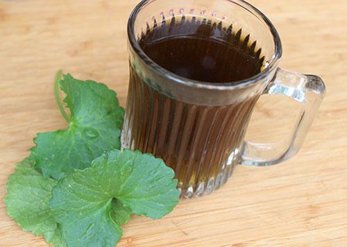 gotu-kola-tea-infusion