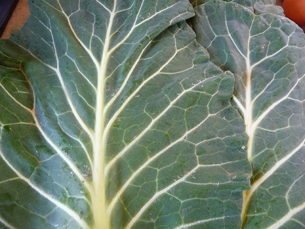 green-leafy-vegetables-benefits-collard