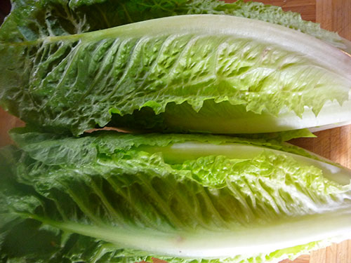 green-leafy-vegetables-lettuce