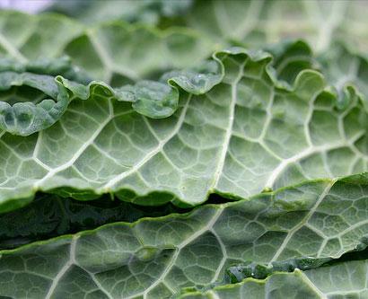 green-smoothie-diet-kale