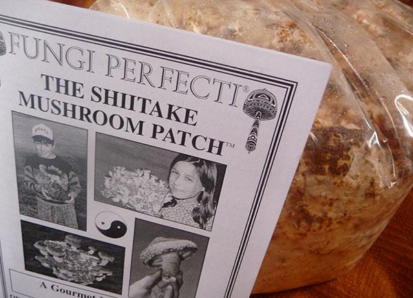 growing-shiitake-mushrooms-kit
