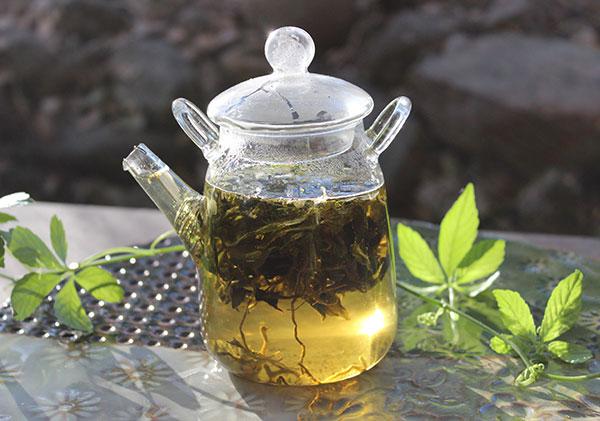 gynostemma-tea-benefits-tea-infusion