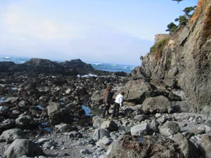 harvesting-seaweeds-low-tide