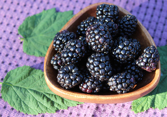 health-benefits-of-blackberries-anthocyanins