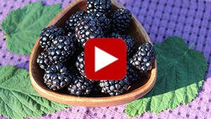 health-benefits-of-blackberries-vid