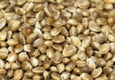 hemp-oil-seeds