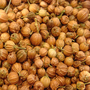 herbal-stimulants-coriander-seed