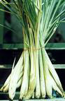 herbs-and-spices-lemon-grass