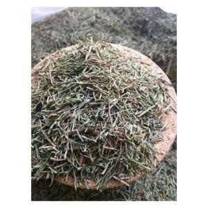 horsetail-bio-herbs