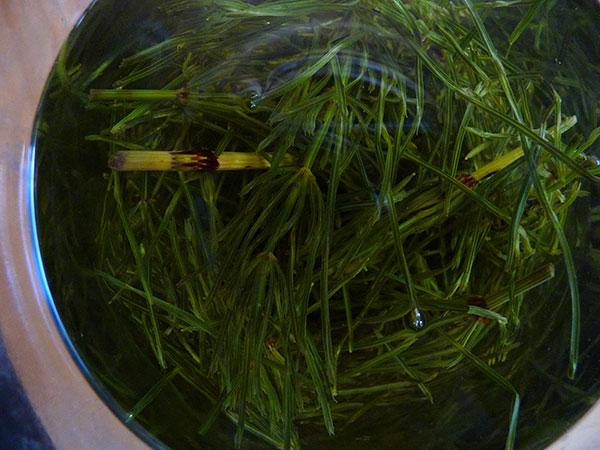 horsetail-tea-infusion