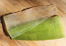 how-to-fillet-aloe-related-pages