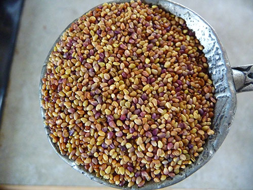 how-to-make-sprouts-sprouting-guide-seed-blend