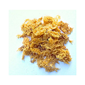 irish-moss-fresh-edwards-amazon