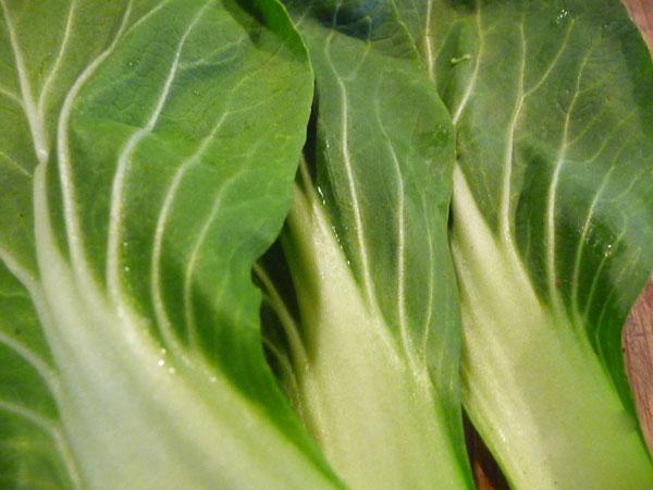leafy-greens-list-bok-choy-greens
