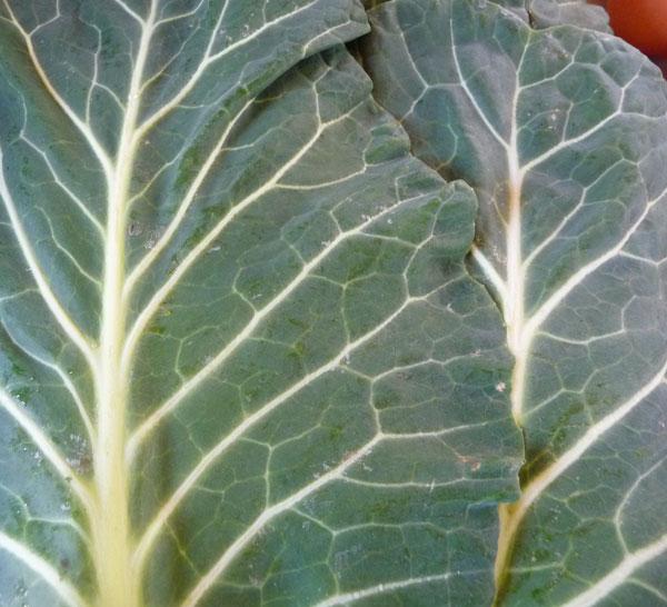 leafy-greens-list-collard-greens