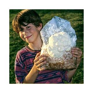lions-mane-mushroom-kit-amazon