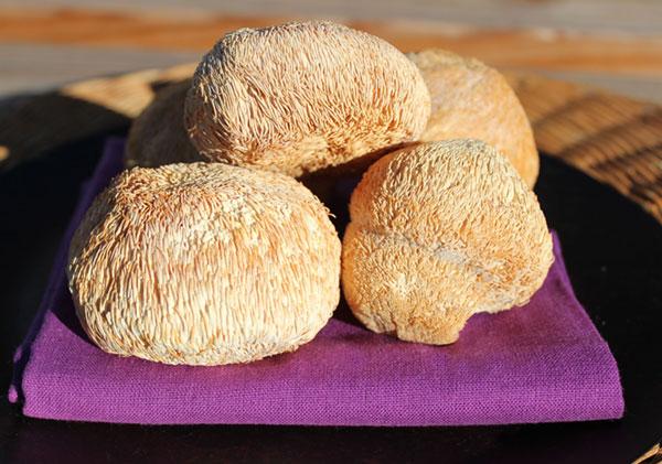 lions-mane-mushrooms-dried