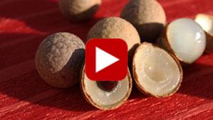 longan-fruit-thumbnail