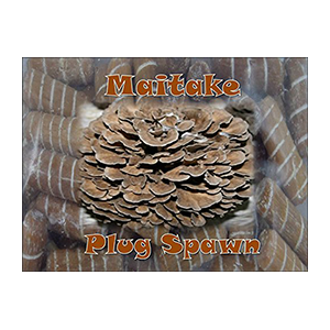 maitake-growing-plugs-forest-org