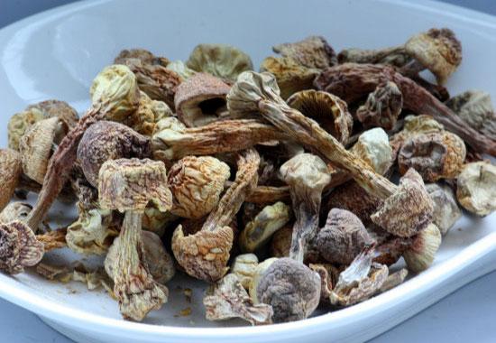med-mushrooms-agar