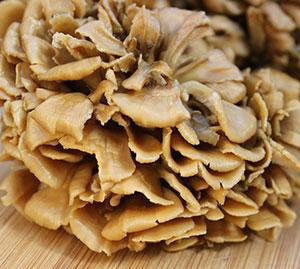 medicinal-mushroom-benefits-maitake