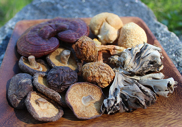 Medicinal Mushrooms Potent Superfoods For Building Immunity