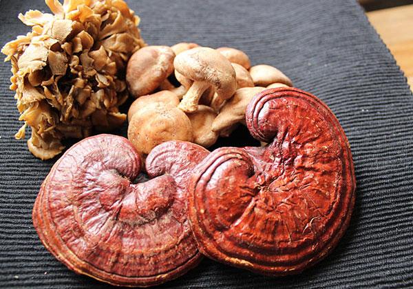 medicinal-mushrooms-home-page