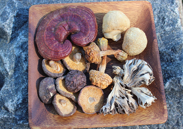 medicinal-mushrooms-nutritional-benefits