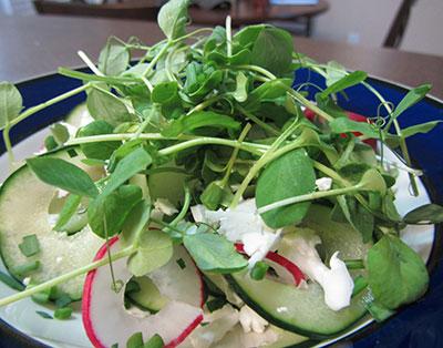 micro-green-salad
