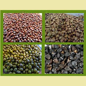microgreens-wide-range-of-seeds-gm
