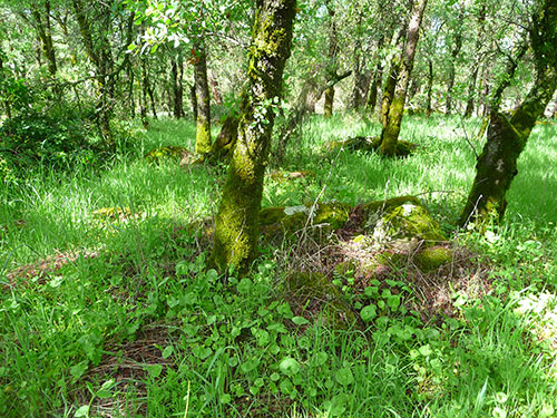 miners-lettuce-harvest-woodlands
