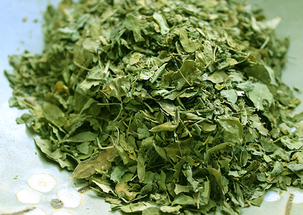 moringa-plant-dried-leaves