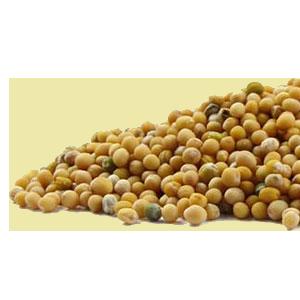 mustard-yellow-mountain-rose-herbs