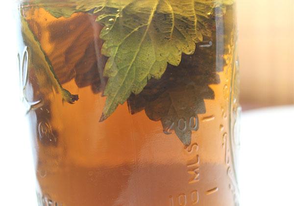 nettle-tea-benefits