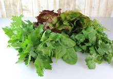 non-cruciferous-green-leafy-vegetables-related-pages