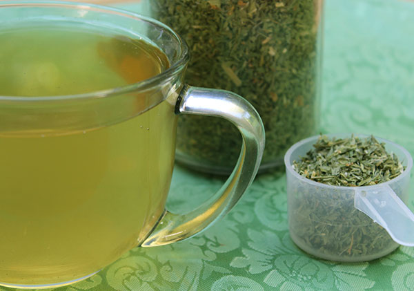 nutritive-herbal-tea-alfalfa-leaf