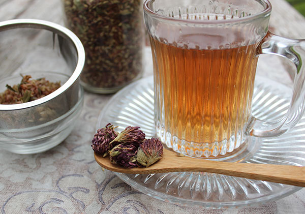 nutritive-herbal-tea-red-clover-blossoms
