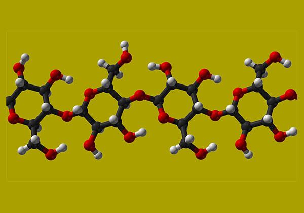 polysaccharides-beta-glucan