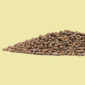 radish-seeds-daikon-mrh