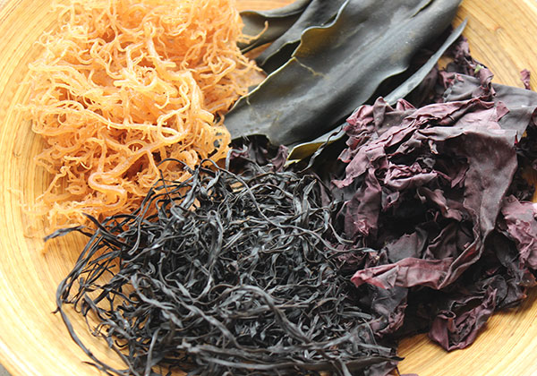 raw-vegan-diet-seaweed